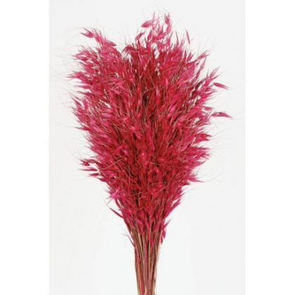 avena-salvaje rosa