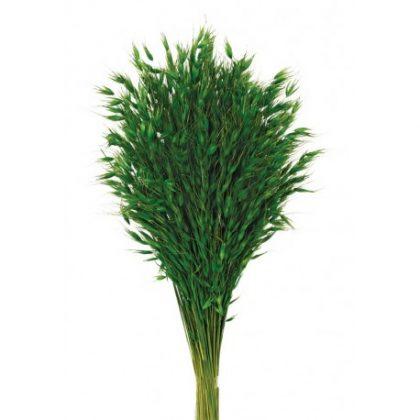 avena-salvaje verde