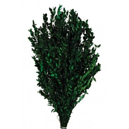 buxus-press verde