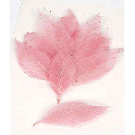 hoja-mini-magnolia rosa
