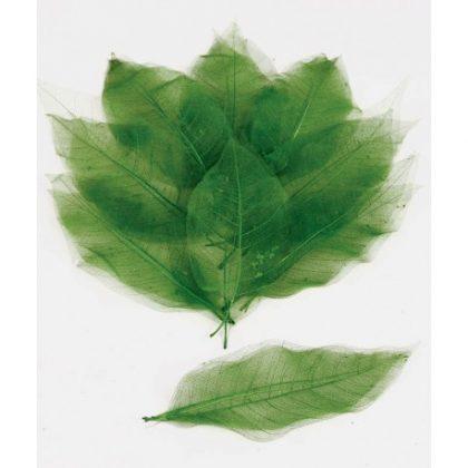 hoja-mini-magnolia verde