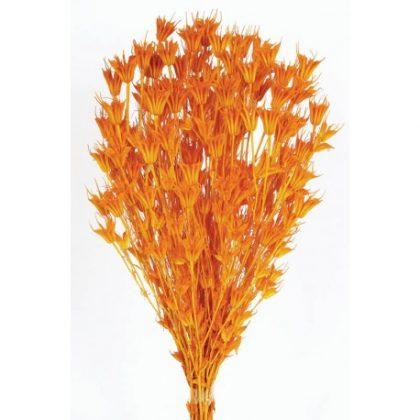 Nigella Orientalis naranja