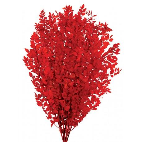 ruscus rojo