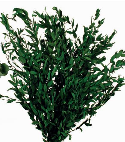 Eucalipto Parvifolia Press